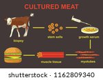 cultured lab grown meat... | Shutterstock .eps vector #1162809340
