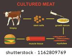 cultured lab grown meat... | Shutterstock . vector #1162809769