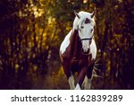 beautiful and sublime stallion... | Shutterstock . vector #1162839289