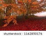 picturesque gold autumn dawn... | Shutterstock . vector #1162850176