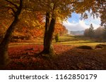 awesome gold autumn dawn image  ... | Shutterstock . vector #1162850179