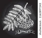 ink hand drawn bunch of rowan... | Shutterstock .eps vector #1162897243