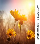 flowers at sunrise | Shutterstock . vector #116298694