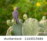 A Single Woodpecker Perched...