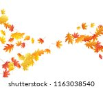 flying oak and maple leaf... | Shutterstock .eps vector #1163038540