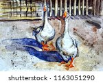 domestic geese walk in the yard.... | Shutterstock . vector #1163051290