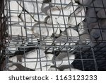 close up outdoor view of a... | Shutterstock . vector #1163123233