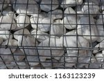 close up outdoor view of a... | Shutterstock . vector #1163123239