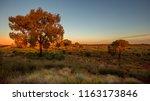 sunset in the australian bush | Shutterstock . vector #1163173846