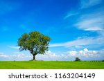 Solitary Tree In Green Field...