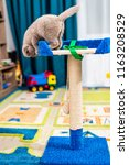 Stock photo cute funny cat playing at home 1163208529