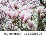 sightseeing in opava city... | Shutterstock . vector #1163225806