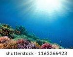underwater coral reef... | Shutterstock . vector #1163266423