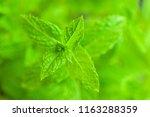 closeup of vividly green fresh... | Shutterstock . vector #1163288359