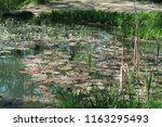 photography of pond located in... | Shutterstock . vector #1163295493
