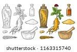 set panax ginseng. root  slice  ... | Shutterstock .eps vector #1163315740