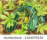 painting of zucchini. hand... | Shutterstock . vector #1163370133