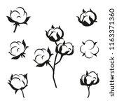 cotton flower plant  organic...   Shutterstock .eps vector #1163371360