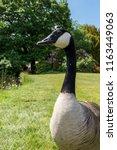 Canada Goose Single Greed...