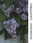 lilac blooms. a beautiful bunch ... | Shutterstock . vector #1163459863
