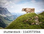 brown mountain cows grazing on... | Shutterstock . vector #1163573566