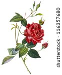 flower illustration | Shutterstock . vector #116357680