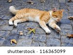 Cat Lying In The Street Among...