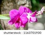 Close Up Blooming Orchid - Fine Art prints