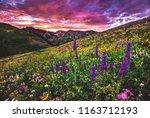 Summertime Alpine Wildflowers...