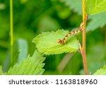 colorful mottled umber... | Shutterstock . vector #1163818960