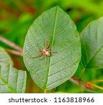 sideways shot of a running crab ... | Shutterstock . vector #1163818966