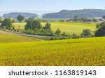 rural agricultural scenery with ... | Shutterstock . vector #1163819143