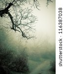 autumn foggy forest | Shutterstock . vector #116387038