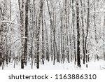 birch grove in winter forest of ... | Shutterstock . vector #1163886310