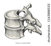 Thoracic Vertebrae Anatomy...