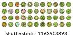 vector set. different flowers... | Shutterstock .eps vector #1163903893