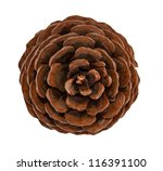 Cedar Pine Cone Isolated On...