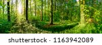 forest panorama in summer with... | Shutterstock . vector #1163942089