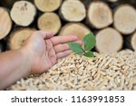 young beech tree in front of... | Shutterstock . vector #1163991853