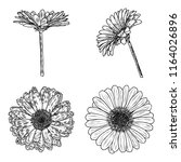 daisy floral botany collection... | Shutterstock .eps vector #1164026896