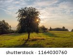 solitary tree at dawn in... | Shutterstock . vector #1164030760