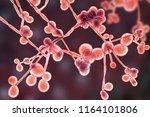 3d illustration of fungi... | Shutterstock . vector #1164101806