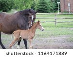 mare and foal | Shutterstock . vector #1164171889