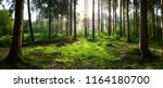 beautiful forest panorama with... | Shutterstock . vector #1164180700