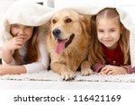 Stock photo cute little girls having fun with golden retriever lying prone on floor at home under blanket 116421169