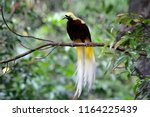 Beatiful Bird Of Paradise On...