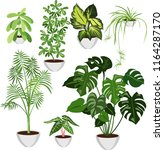 set of home plants in pots | Shutterstock .eps vector #1164287170