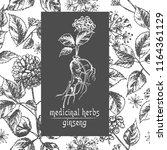 realistic botanical ink sketch... | Shutterstock .eps vector #1164361129