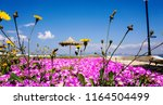 beautiful flower background.... | Shutterstock . vector #1164504499