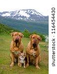 Three Dogs Against Norwegian...